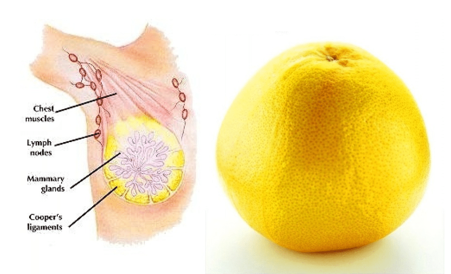 8 Foods Similar To The Organs Of The Body And How They Benefit You